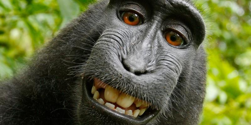Mono simpático
